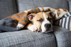 How to Recognize a Pet Emergency